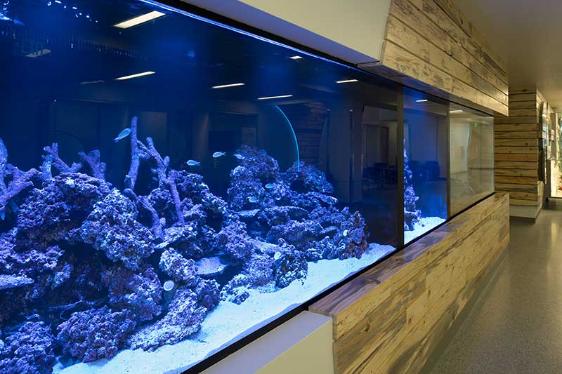 aquariums in biology building lobby