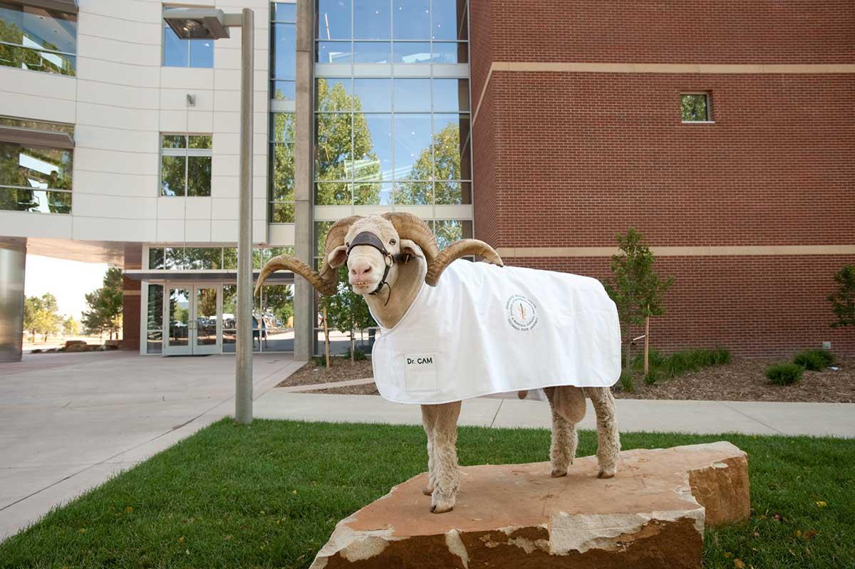 cam the ram in front of diagnostic medicine center