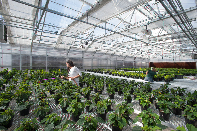 Grad student watering plants