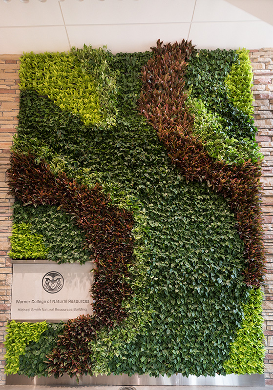 Living wall in the Michael Smith Natural Resources Building